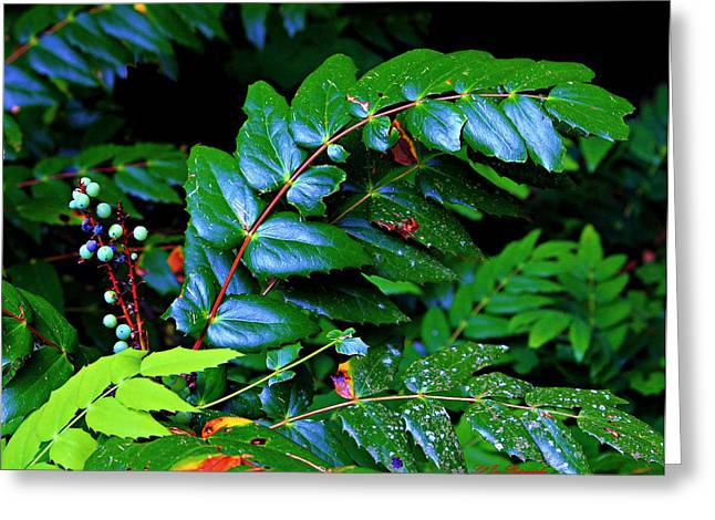 Campground Foliage Greeting Card