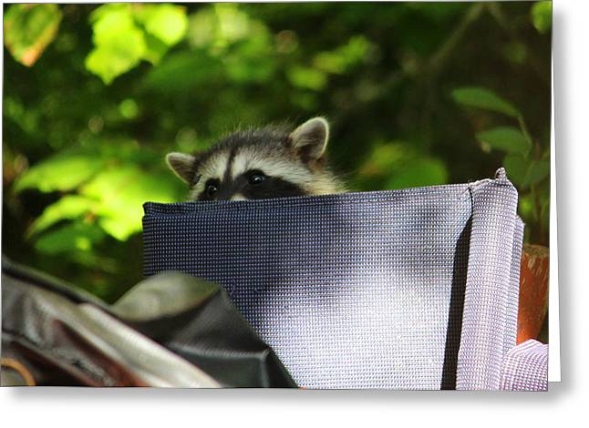 Can I Get Some Privacy Here Greeting Card by Kym Backland