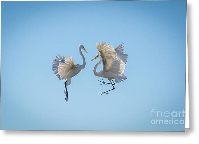 Can I Have This Dance Greeting Card by Matthew Trudeau