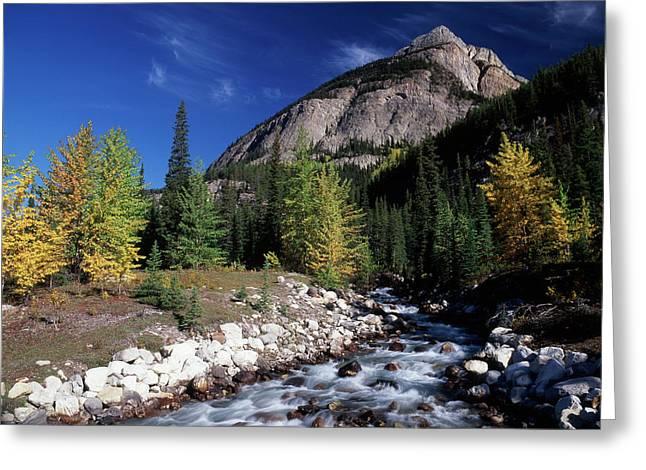 Canada, Alberta, Rampart Creek At Banff Greeting Card by Jaynes Gallery