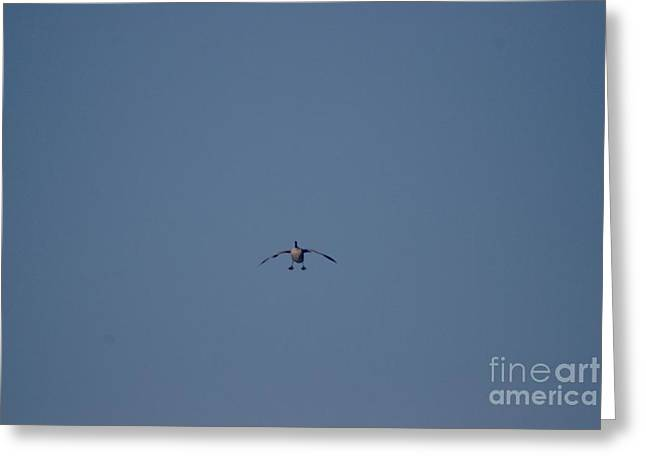 Greeting Card featuring the photograph Canada Cleared For Landing by Mark McReynolds