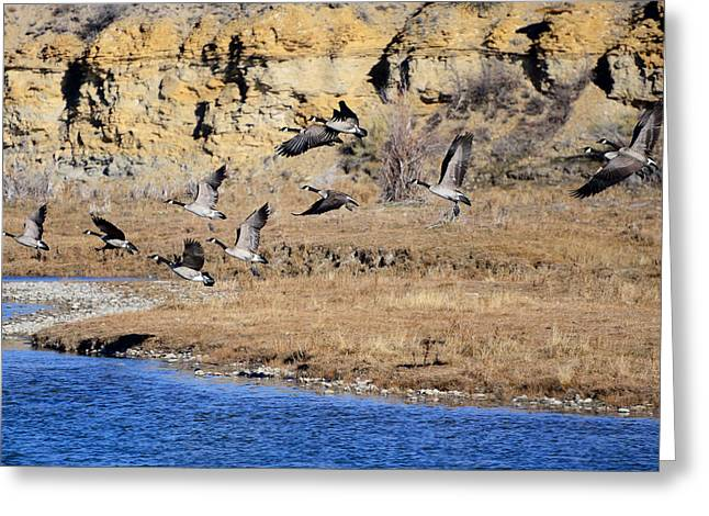 Canada Geese Along The Green River Greeting Card by Eric Nielsen