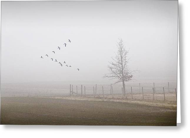 Canada Geese Flying On A Foggy Morning Greeting Card by Randall Nyhof
