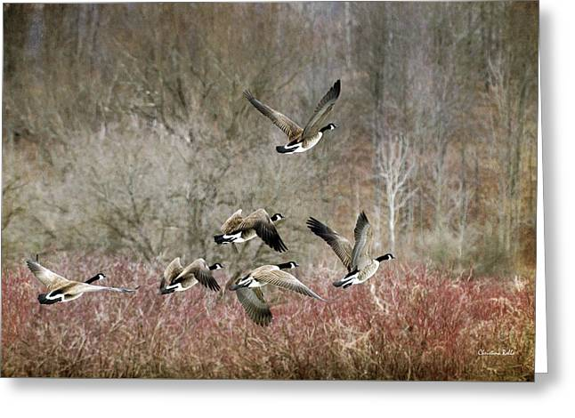 Canada Geese In Flight Greeting Card by Christina Rollo