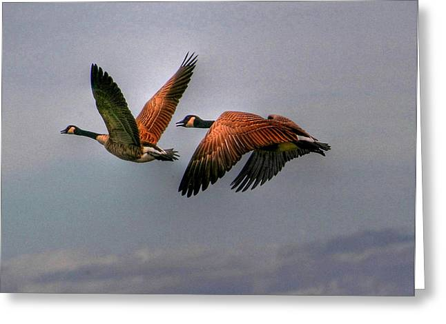 Greeting Card featuring the photograph Canada Geese In Flight by Larry Trupp