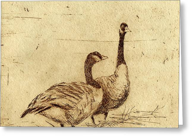 Canada Geese Greeting Card by Neil Rizos