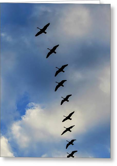 Canada Geese Silhouetted Against Sky Greeting Card