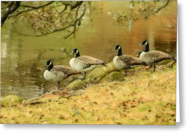 Canada Geese Greeting Card by Tommytechno Sweden