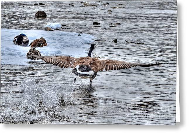 Canada Goose - The Runway Greeting Card by Skye Ryan-Evans