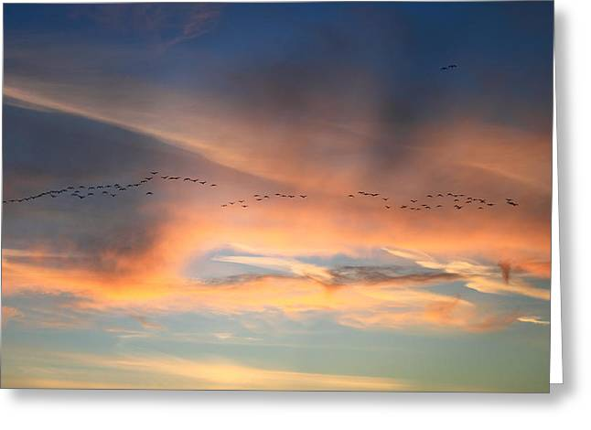 Canada Goose Flock Sunset Greeting Card by John Burk