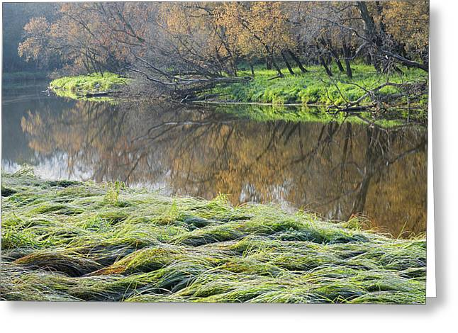 Canada Manitoba Autumn On Shore Greeting Card by Jaynes Gallery
