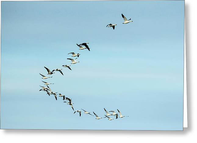 Canada, Nunavut Territory, Flock Greeting Card by Paul Souders