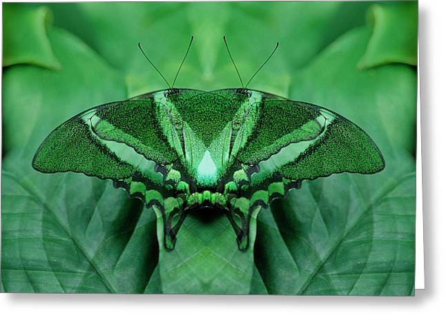 Canada, Victoria, Victoria Butterfly Greeting Card by Jaynes Gallery