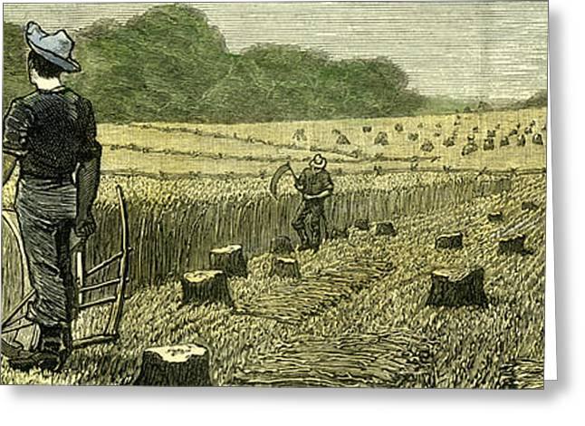 Canada Wheat Harvest In New Land 1880 Greeting Card by Canadian School