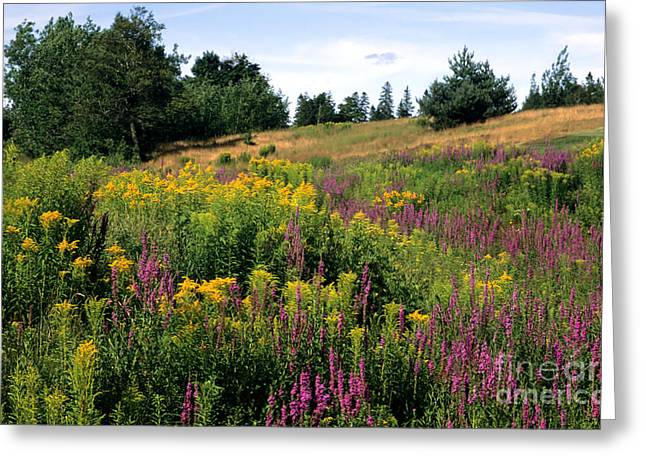 Greeting Card featuring the photograph Canada Wildflower Meadow by Chris Scroggins