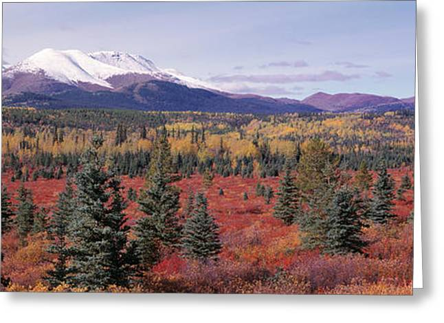 Canada, Yukon Territory, View Of Pines Greeting Card