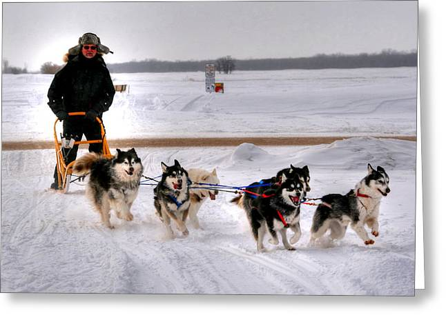 Greeting Card featuring the photograph Canadian Dogsled Team by Larry Trupp
