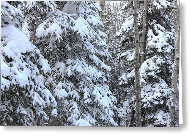 Canadian Forest - Winter Snowfall Greeting Card