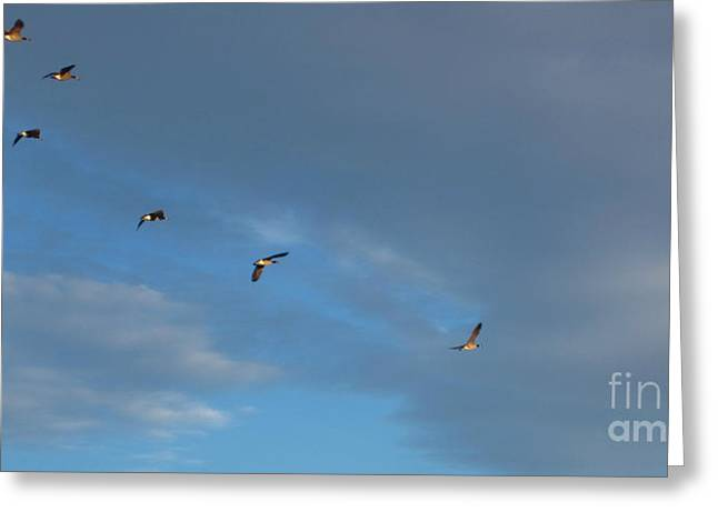 Canadian Geese 1 Of 3 Greeting Card by Janet Otto