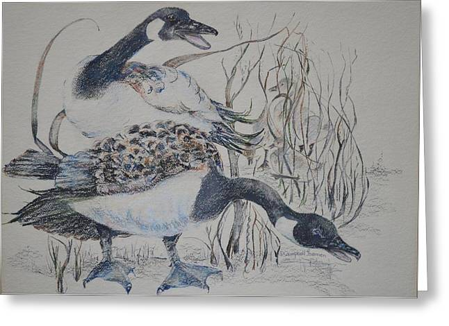 Canadian Geese Greeting Card by Dorothy Campbell Therrien