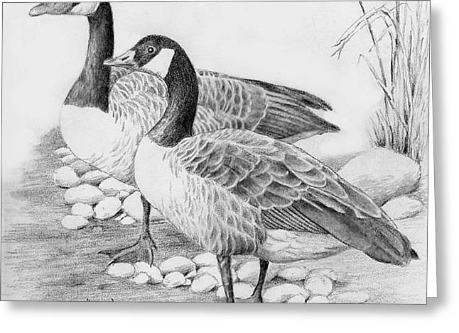 Canadian Geese  Greeting Card by Suzanne Schaefer