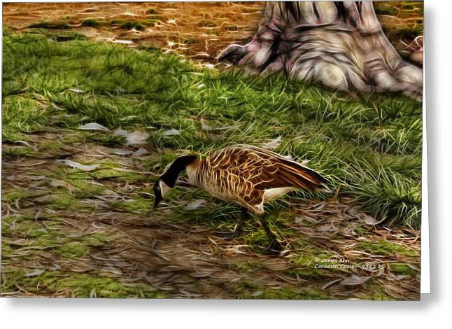 Canadian Goose 9382 F S Greeting Card by James Ahn