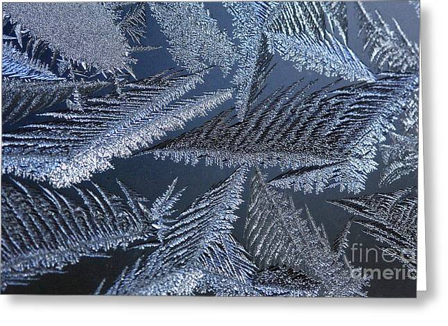 Canadian Winter Keeps On Giving - Polar Chill Greeting Card