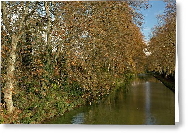 Canal Du Midi And Plane Trees Greeting Card by Bob Gibbons