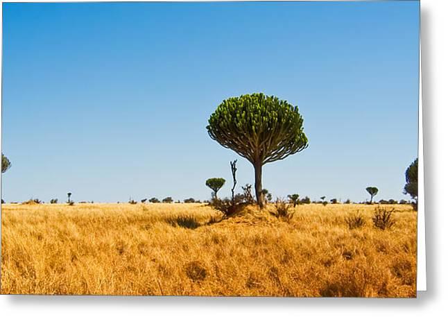 Candelabra Trees Greeting Card