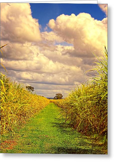 Greeting Card featuring the photograph Cane Fields by Wallaroo Images
