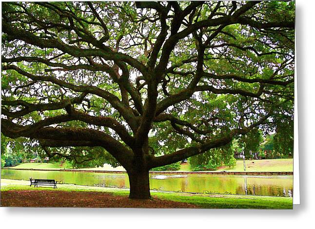 Cane River Oak Greeting Card