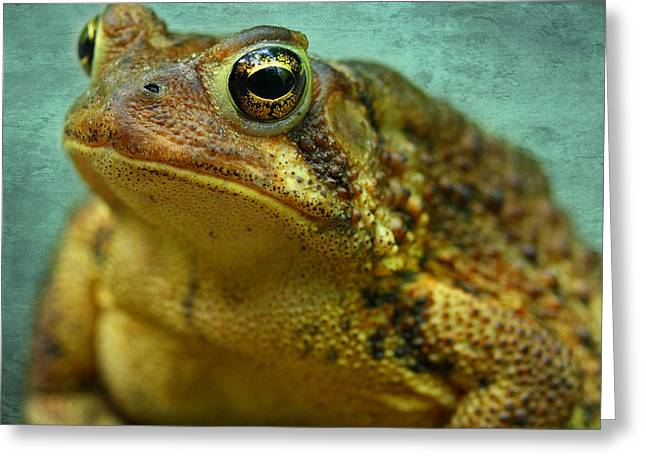 Cane Toad Greeting Card by Michael Eingle