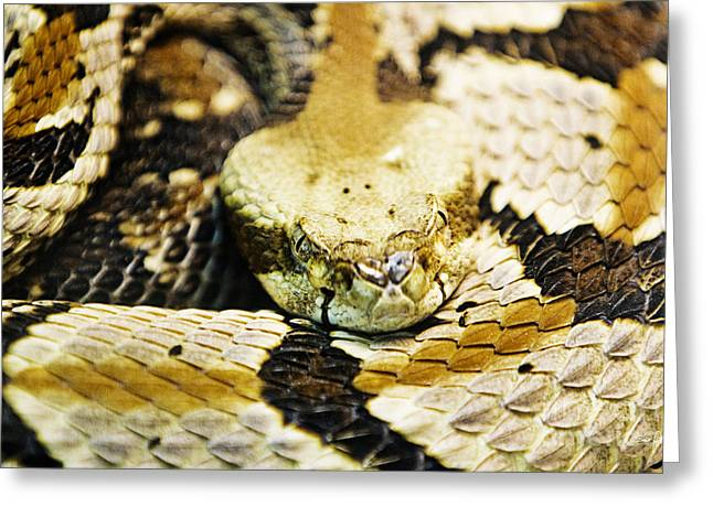 Canebrake Greeting Cards - Canebrake Greeting Card by Scott Pellegrin