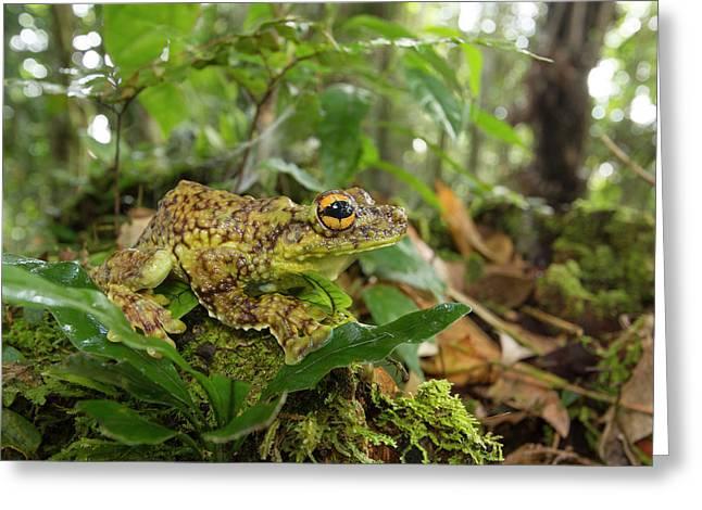 Canelos Treefrog Greeting Card