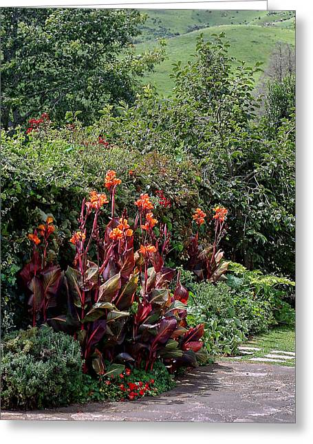 Canna Flowers On Pathway Greeting Card by Linda Phelps