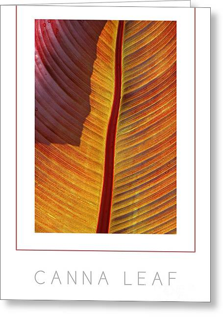 Canna Leaf Poster Greeting Card by Mike Nellums