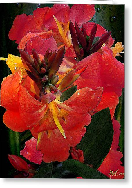 Canna Lily Greeting Card by Michele Avanti