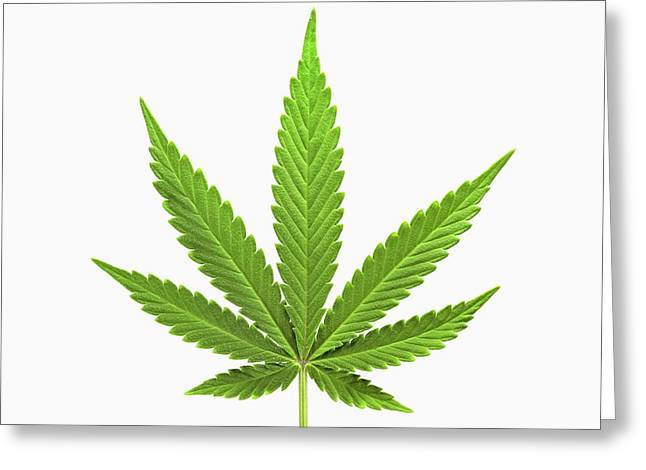 Cannabis Sativa Leaf Greeting Card by Antonio Romero