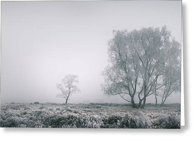 Cannock Chase Greeting Card by Andy Astbury