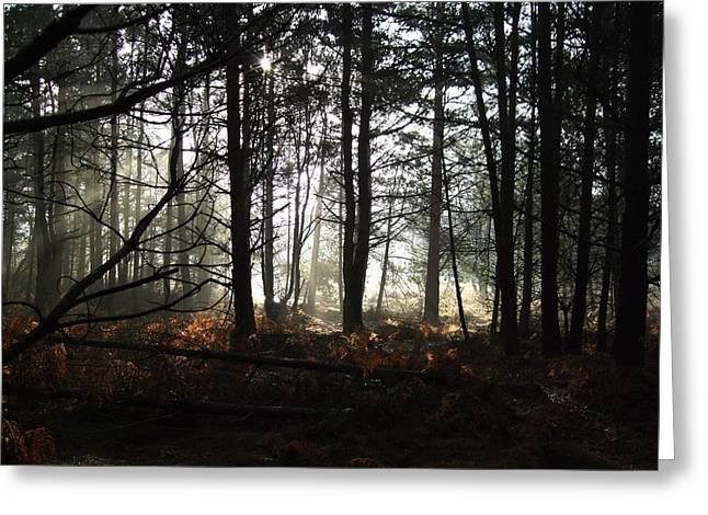 Cannock Chase Greeting Card by Jean Walker