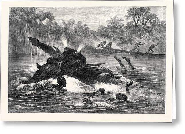 Canoe Destroyed By A Hippopotamus On The River Zambesi Greeting Card by South African School