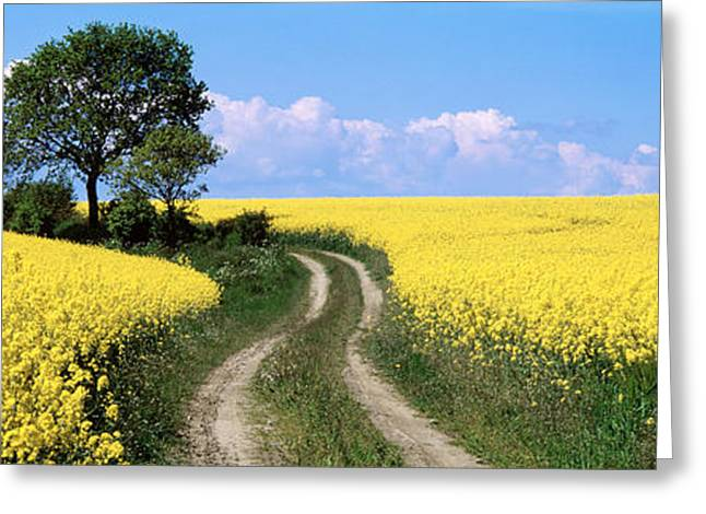 Canola, Farm, Yellow Flowers, Germany Greeting Card