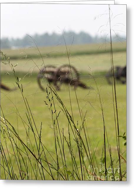 Canon In The Weeds Greeting Card by Dwight Cook