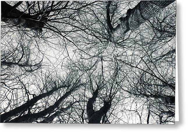 Canopy Greeting Card by Dan Lee