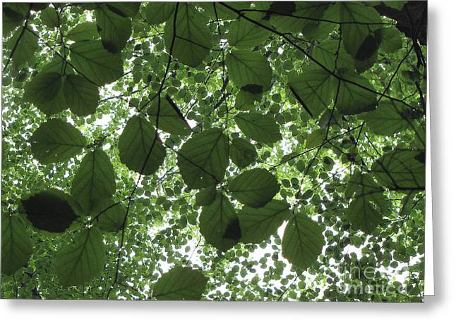 Canopy In Green 3 Greeting Card