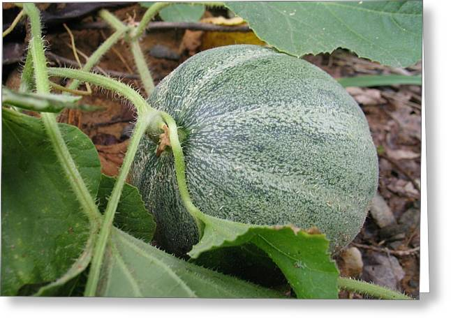 Cantaloupe  Greeting Card