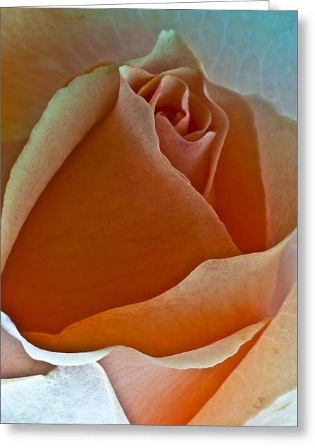 Canyon Rose Greeting Card by Art Barker
