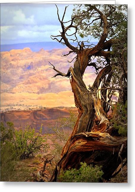 Canyon Vista 1 Greeting Card by Marty Koch