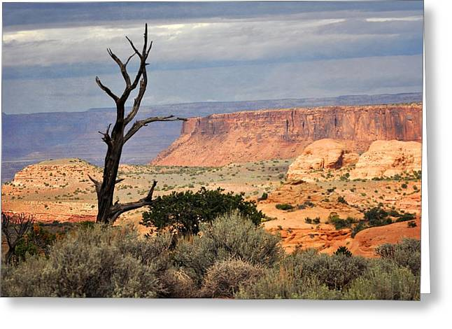 Canyon Vista 2 Greeting Card by Marty Koch