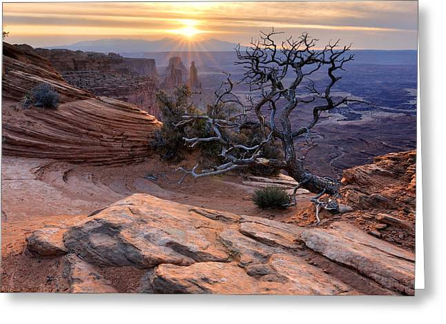 Canyonlands Sunrise Landscape With Dry Tree Greeting Card by Yevgen Timashov